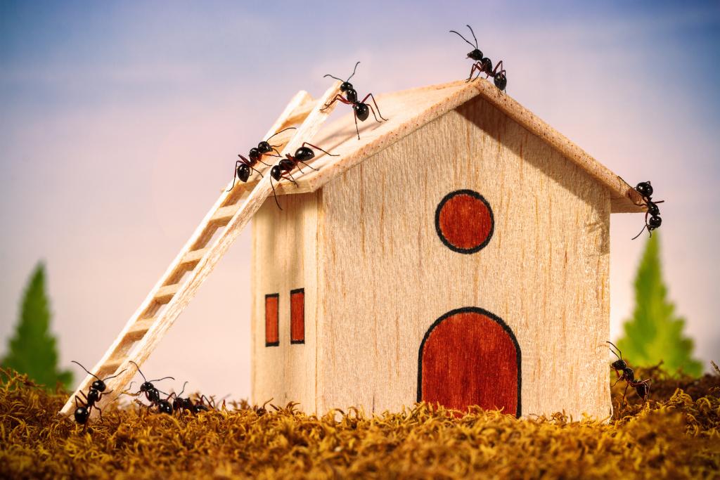 Fourmis qui escaladent une maison miniature en bois