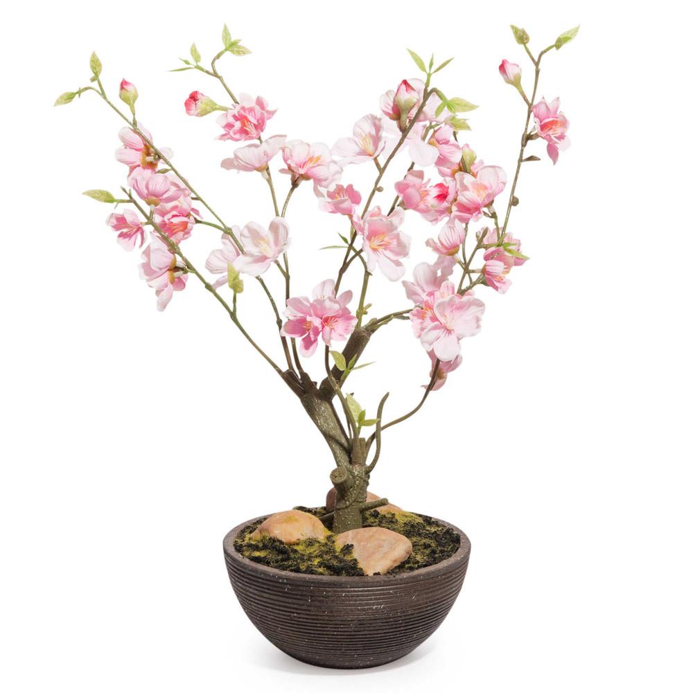 Une plante zen pour décorer son bureau
