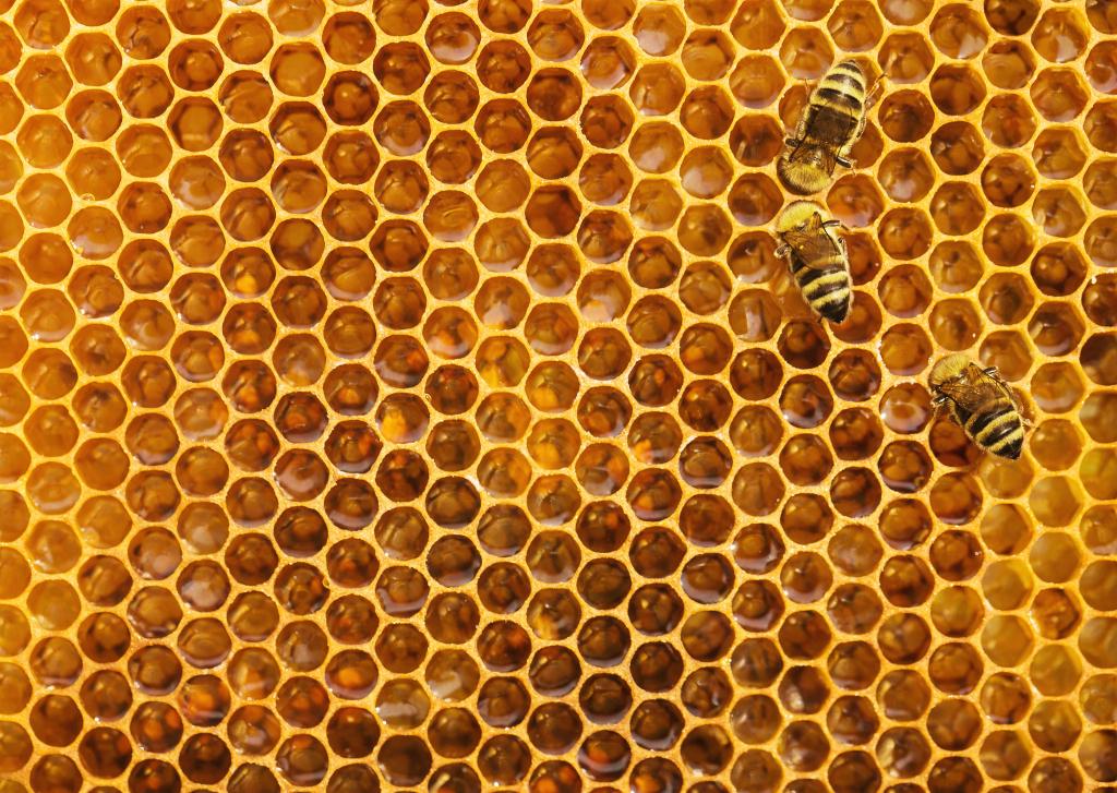 Abeilles dans une ruche artificielle - logements des animaux